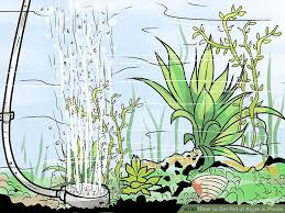 How To Get Rid Of Raccoons In Backyard How To Get Rid Of Algae In Ponds 14 Steps With Pictures
