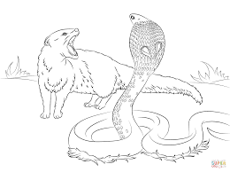 cobra vs mongoose coloring page free printable coloring pages