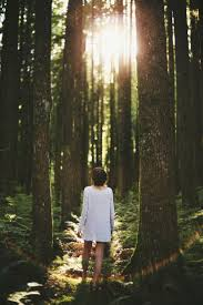 Cool Off With A Walk by A Walk Through The Woods Which Season Represents Your Life U0027s