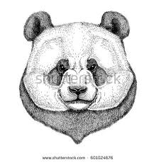 royalty free sketch realistic face brown bear u2026 267975689 stock