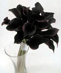 black calla best 25 black calla ideas on flowers