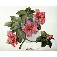 which state has a hibiscus caribbean nostalgia hibiscus flower by david moore caribbean