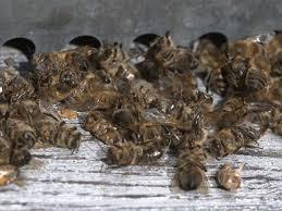 chambre d agriculture rennes des apiculteurs bretons entament un convoi mortuaire de morlaix à
