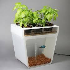 home aquaponics garden for home or something like it pinterest