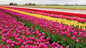 Most Beautiful Gardens In The World The Most Beautiful Spring Garden In The World Holland U0027s Keukenhof
