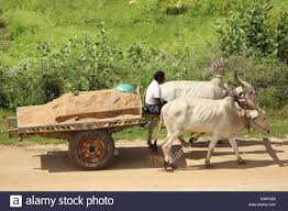 indian cart indian farmer with bullock cart andhra pradesh south india stock