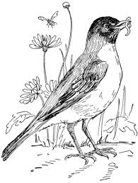 robin in flower garden coloring page free printable coloring pages