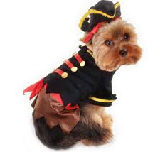 Halloween Costumes Yorkies Morkies Dress Halloween U2013 Morkies
