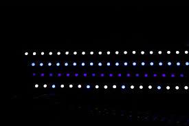 black light led strip ecoxotic stunner led strips aquanerd