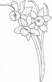 pic daffodil colouring pages tulip flower coloring