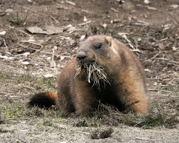 groundhog day redux in moscow finally spring is near russia beyond