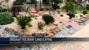 native plant landscaping ideas psa drought tolerant landscaping youtube