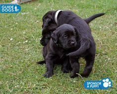 Training A Guide Dog For The Blind Being Blind Does Not Mean You Stop Living U0027 Guide Dogs Can Guide