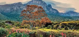 Kirstenbosch National Botanical Gardens by Visit Kirstenbosch Botanical Gardens
