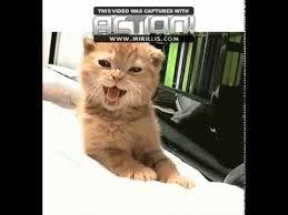 Good Morning Cat Meme - goodmorning cat gif youtube