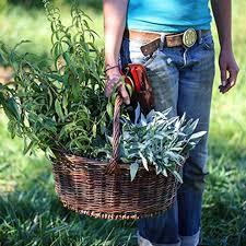 online herbal programs herbalism courses growing herbs