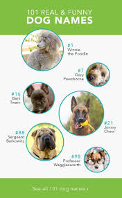 Funny Food Names Meme - 101 real and funny dog names care com