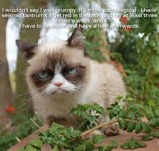 Original Grumpy Cat Meme - grumpy cat meme s by gary graefen