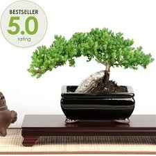 14 best bonsai images on bonsai trees bonsai plants