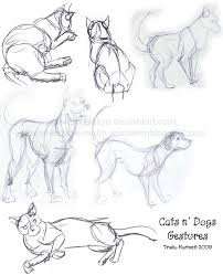 cat and dog gestures by silverskye on deviantart