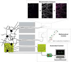 compartmentalized microfluidic platforms the unrivaled