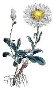 Daisy The Flower - 17 best grandchild garden images on pinterest birth flower