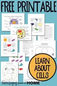 plant and animal cell printables grades 4 6 animal cell