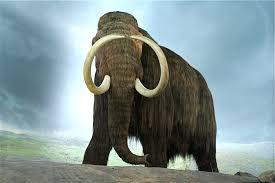 bringing extinct animals cloning research concerns