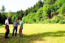 Steinach Baden Kinzigtal Steinach Welschensteinach Arbeitseinsatz Am Tannenwald