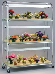 african violet grow light 600 best african violets images on pinterest african violet
