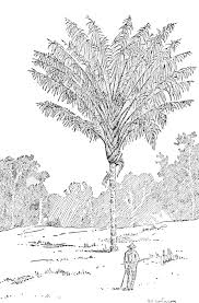 popular science monthly volume 60 march 1902 the palm trees of