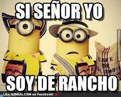 Si Memes - si señor yo soy de rancho minions soy de rancho know your meme