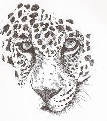 leopard drawing by pat barker