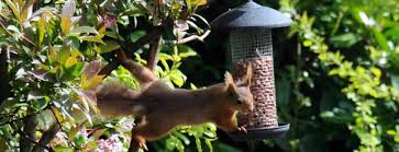 Dog Friendly Cottages Lake District by Appletree Cottage Dog Friendly Lake District Self Catering Cottages
