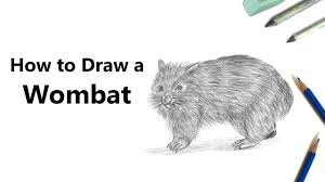 how to draw a wombat with pencils time lapse youtube