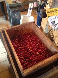 exploring massachusetts u0027 cranberry bogs consider the cranberry i