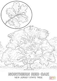 New Jersy Flag New Jersey State Tree Coloring Page Free Printable New Jersey