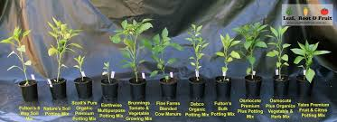 which potting mix is best leaf root u0026 fruit gardening services