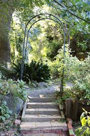 australian native climbing plants garden visit a fern filled forest in australia gardenista