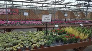 special offers u0026 promotions embleys nurseries traditional garden