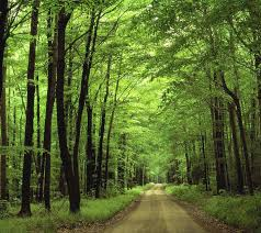 Forest Green by Nature Forest Wallpaper Wallpapersafari