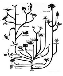 charles darwin tree of poster tracing out the lineages of