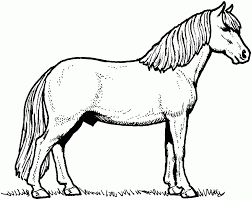 100 foal coloring pages spirit and rain coloring pages feather