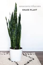 Best Plant For Bathroom by Best Plants For The Bedroom Inspired Air Purifying Highest Oxygen