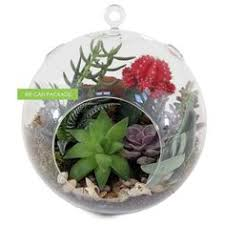 4 hanging globe glass orb terrarium container by wecanpackage
