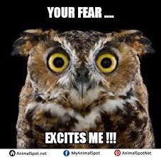 Art School Owl Meme - owl memes