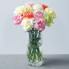 carnation bouquet carnation bouquet 12 classic carnations bunches co uk