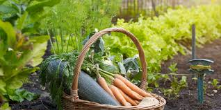 Florida Vegetable Gardening Guide by This Genius Cheat Sheet For Gardeners Tells Where And When To