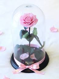 peonies u0026 petals shop