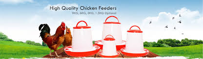 chicken feeder and drinker for sale china poultry supplies